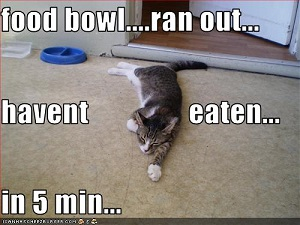 food bowl ... ran out... haven't eaten... in 5 min...